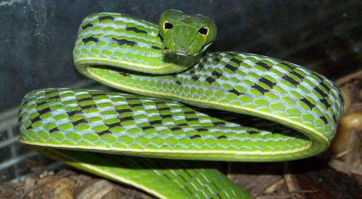 SerpientesDeVerano
