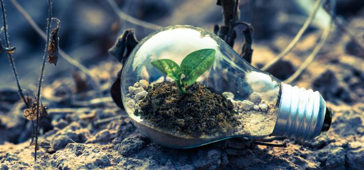 greenwashing-empresas-gallegas
